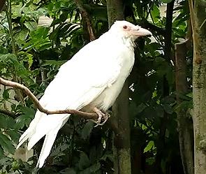 В Петербурге нашли белую ворону