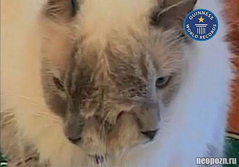 двумордый кот попал в книгу рекордов гиннеса