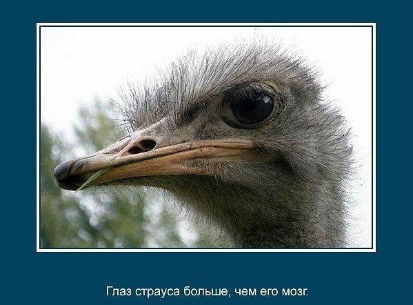 интересные факты из жизни животных