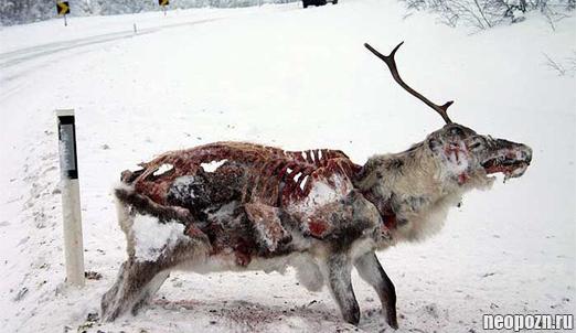 замерзшие животные