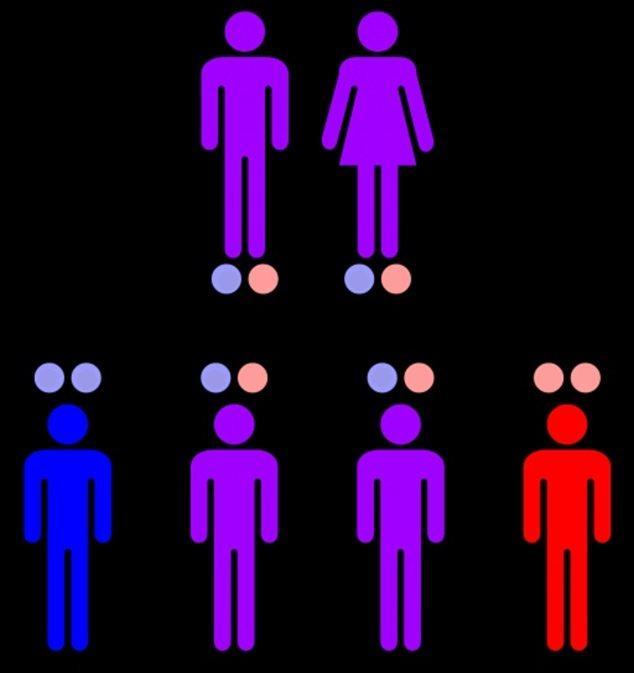У родителей с рецессивным геном-Г (красные кружки) может родиться ребенок с синей, фиолетовой и даже красной кожей