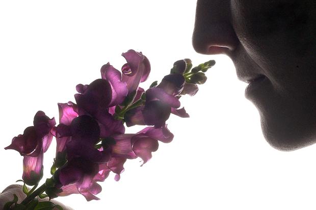 факты о запахах