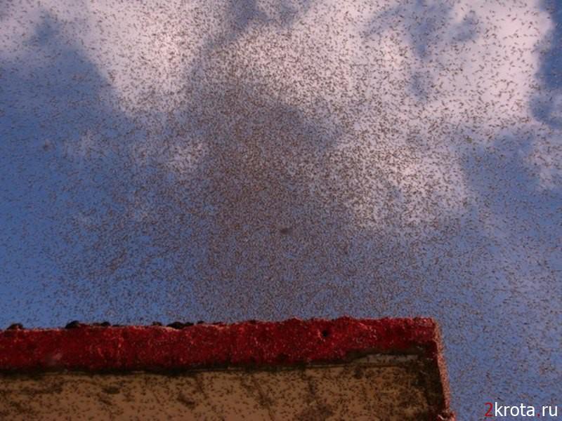 тучи комаров над Беларусю