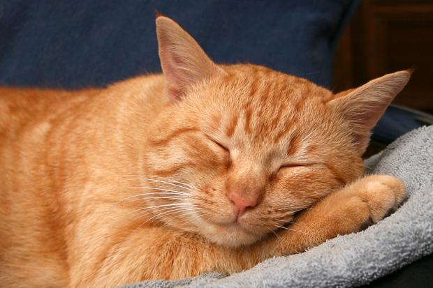 Пропавший кот три недели добирался до дома на сломанных лапах