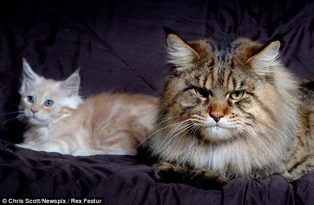 огромный кот