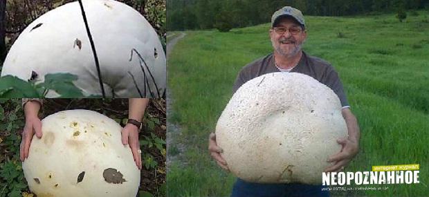 Канадец нашел 26-килограммовый гриб